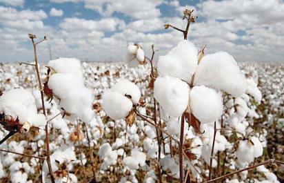 Узбекистан экспорт хлопка сокращаются